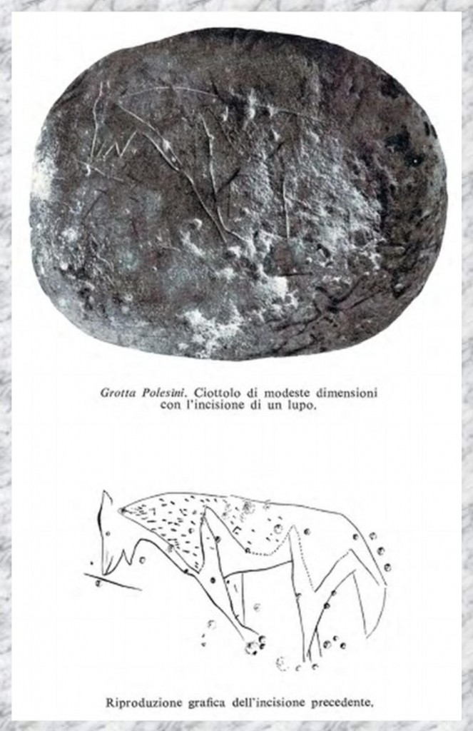 lupo_inciso_di_Grotta_Polesini_CARTOLINA_STSA